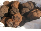 Tartufo Nero di Montemale (Cuneo)